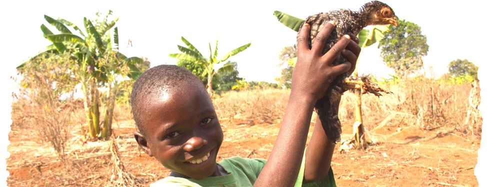 An African boy holding a chicken
