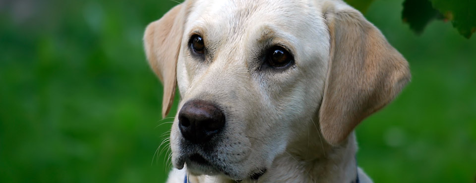 Guide Dogs Victory For Road Safety
