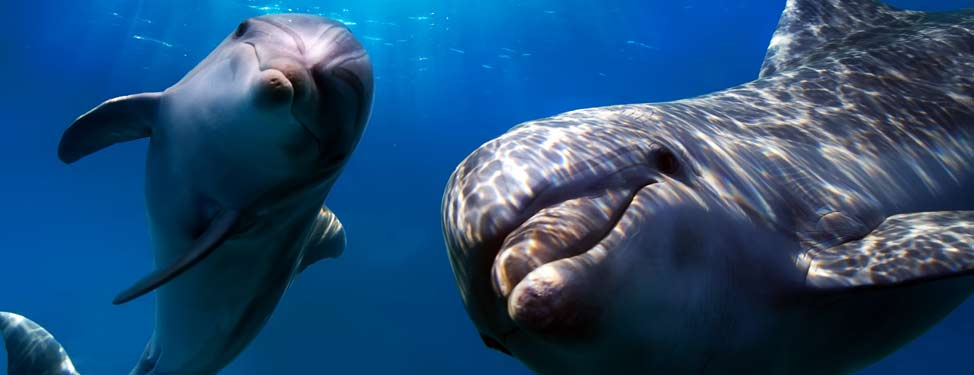 Two playful looking dolphins