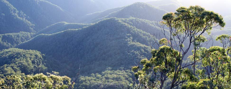 Amazing view of rainforest