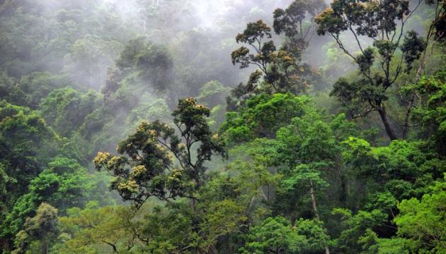 Amazing rainforest