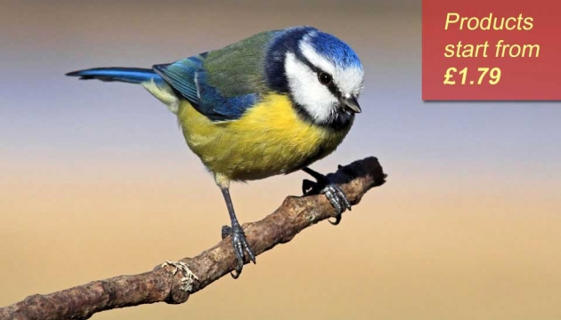 Blue tit sitting on a twig
