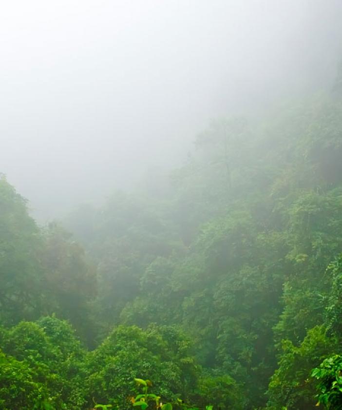 Pristine rainforest vista