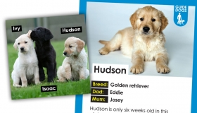 New guide dog puppies you can sponsor - Ivy, Isaac and Hudson